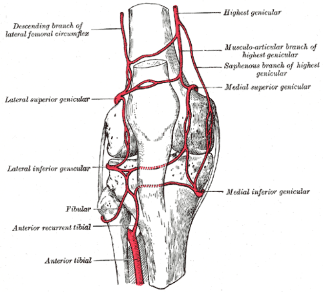 Kniearterie