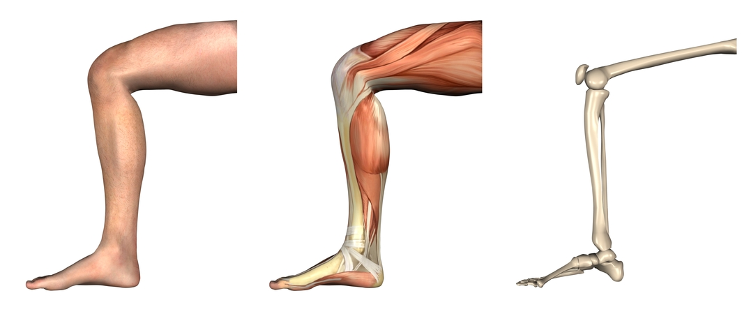 Beugemuskulatur des Knies – Anatomie und Aufbau | Med-Library.com