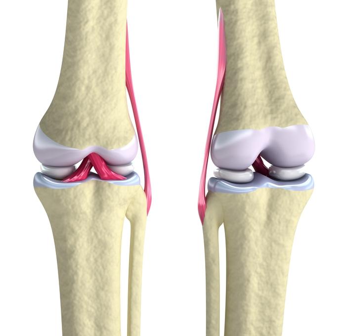 Capsula articularis genu / Kniegelenkkapsel – Anatomie der ...